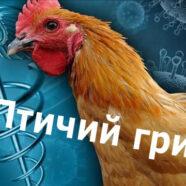 О регистрации  очага гриппа птиц в деревне Березняки в Сергиево-Посадском районе Московской области. Меры профилактики